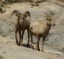 Wild Animal Park 03-09 056
