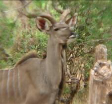 Ivory Lodge & Safari Pictures0153