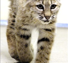 Wildlife Images #29 Photos of animals at Wildlife Images, a rehabilitation center in Oregon. Here's their URL: http://www.wildlifeimages.org/