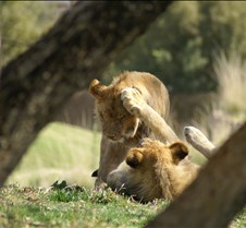 Wild Animal Park 03-09 143