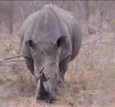 Ivory Lodge & Safari Pictures0112