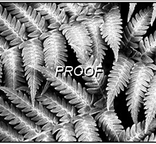 2 Fern Leaves B and W (3)