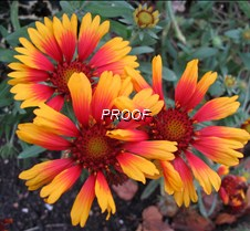 Glorious Blooms Vibrantly Colored Flowers