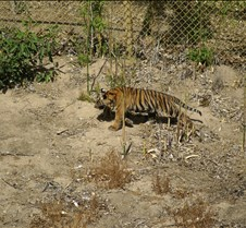 Wild Animal Park 03-09 094