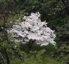 spring 2011 065