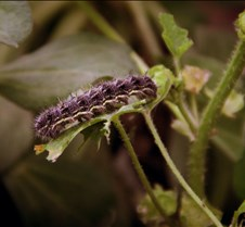 Bug Fair caterpiller 1