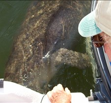 The Manatee loves our boat!