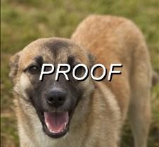 043013-POW-dog02