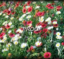 DSC03420 Wildflowers #1