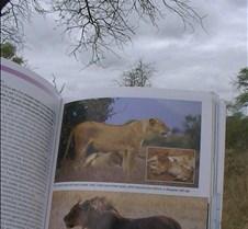 Ivory Lodge & Safari Pictures0141