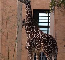 J Zoo 0611_120