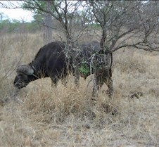 Ivory Lodge & Safari Pictures0092