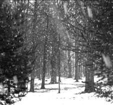snowfall2-bw