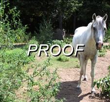08-11-13_Horse02