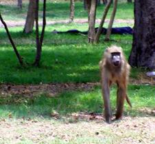 Lokuthal & Safari Lodges & Grounds0021