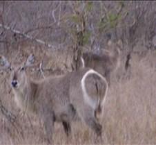 Ivory Lodge Safari Mupulanga0016