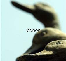 duck2good