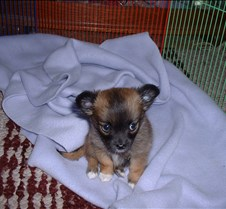 Puppy Picts 001