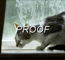 071514_PetOfTheWeek_Cat