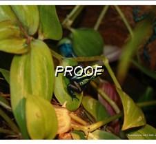 Rain Forrest Frog