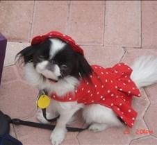 red dress(1)