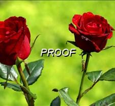 2 Rosas