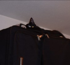 Shy sleeping on a suitcase in the closet