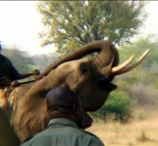 Elephant Ride0007