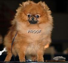 dogshow1
