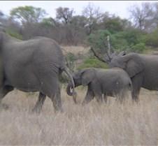 Ivory Lodge & Safari Pictures0108