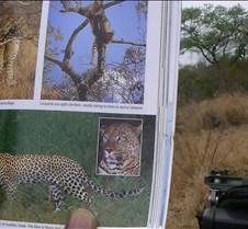 Ivory Lodge & Safari Pictures0140