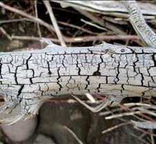 Branch Lines