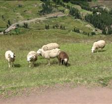 Peru 136