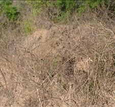 Ivory Lodge Safari Mupulanga0048