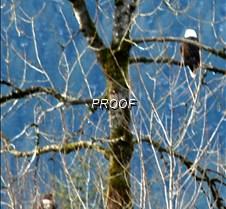 eagletree-15