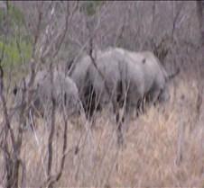 Ivory Lodge Safari Mupulanga0017