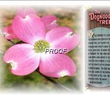 Dogwood 3