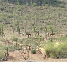 Tucson Lazy K horses 1