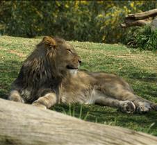 Wild Animal Park 03-09 168