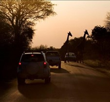 Roadcrossing