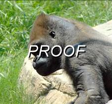 Gorilla 001