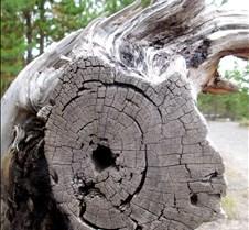 Artist Tree