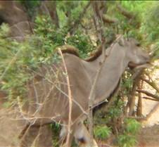 Ivory Lodge & Safari Pictures0150