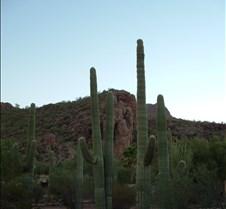 Tucson desert 2