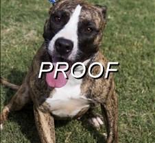 07-28-14_pow_dog