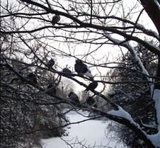 Frozen Pigeons, Copenhagen, Denmark