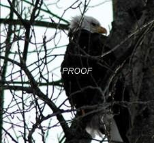 eagletree-6