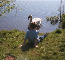 boy and the swan