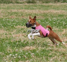 Basenjis_8July_BOB_Runoff__5431CR