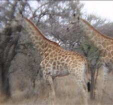 Ivory Lodge & Safari Pictures0088